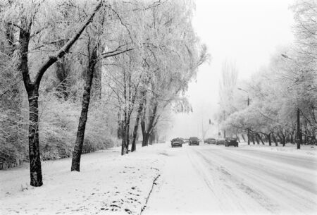 snowbound: Winter city road with cars and snowbound trees on the sides