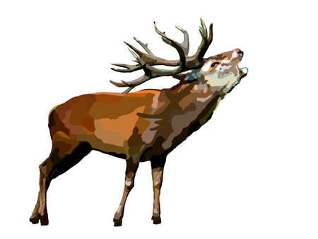 Vector deer isolated on white background