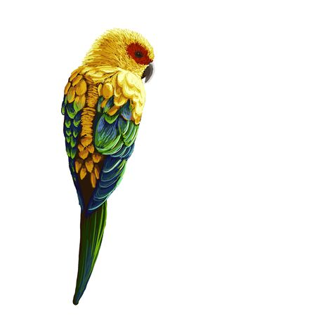 bright: Bright painted parrot isolated illustration Illustration