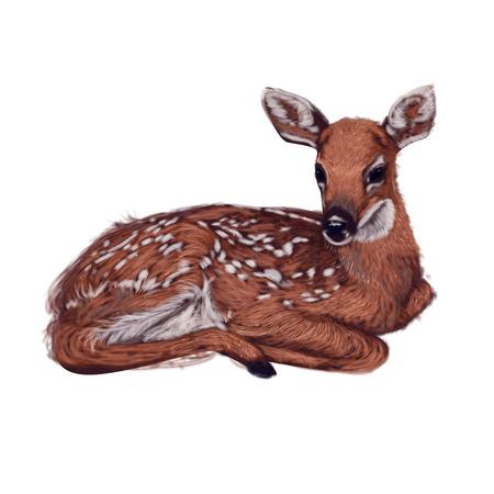 작은 아기 사슴 그림을 거짓말 스톡 콘텐츠