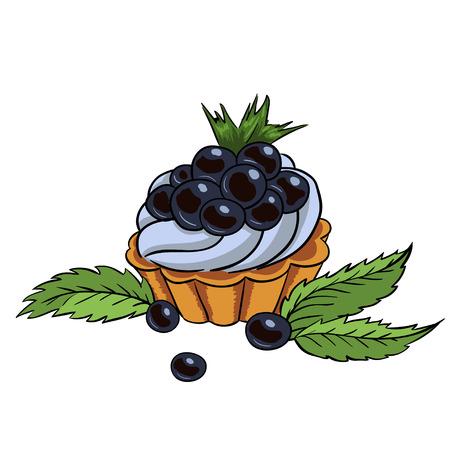 blueberry cupcake illustration mint leaves