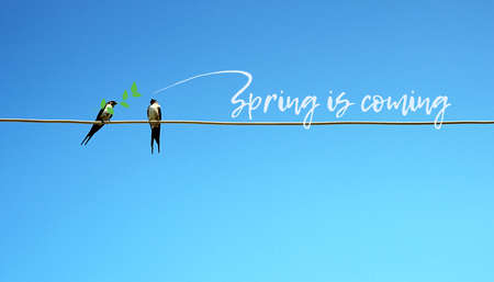 Spring is coming concept. Two swallow sitting on a wire in one branch in beak. other tweets - spring comes. cute pretty picture
