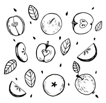 Minimalistic sketch of whole apple and cut apple. Black and white still life with details. Vector isolated hand drawn illustration.