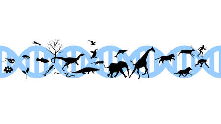 Set of animals icons vector design. Animals icon collection. Evolution illustration