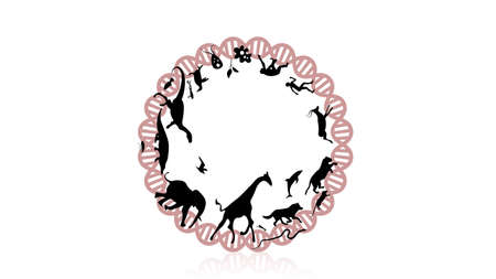 Evolution of species illustration. Evolution vector design