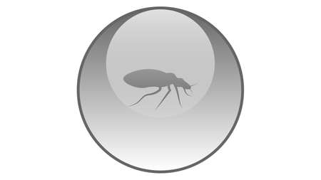 Bug icon vector design. Insects vector