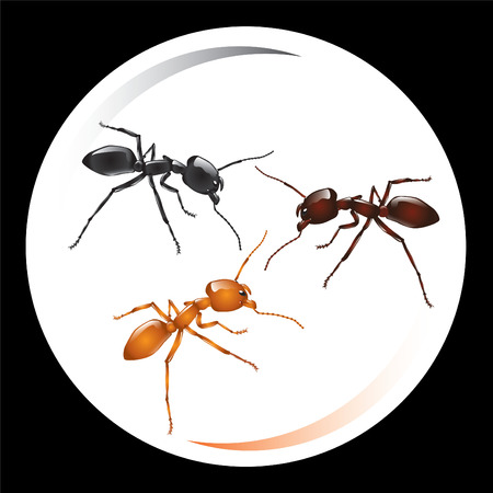 Ant. Vector illustration