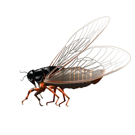 antennae: Cricket insect isolated on white. Vector, illustration.