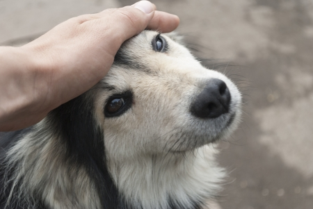 Human hand stroking the dog Фото со стока
