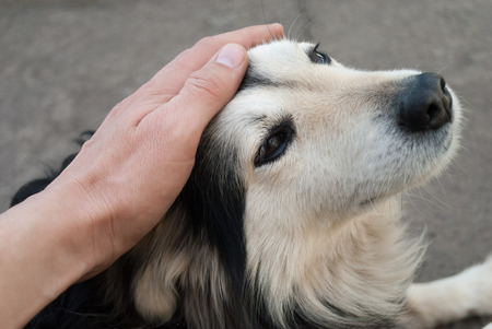 animal hair: Man stroking the dog head close up.