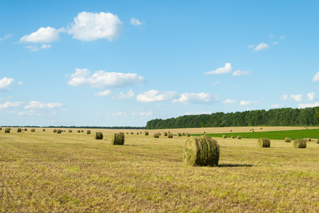 cuttings: Round bales of straw grass on sloping fields. Stock Photo