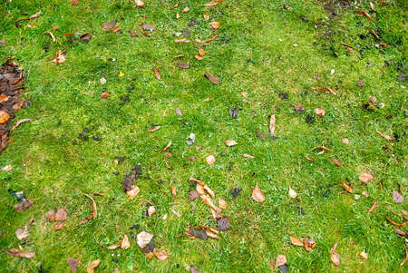 grass field from above. Autumn Leaves On Green Grass Field, View From Above Stock Photo - 70746918 Field T