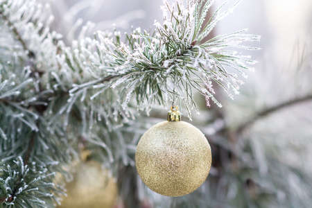 Blue Christmas ball on a snow-covered tree branch. christmas tree background. Selective focus Stock Photo