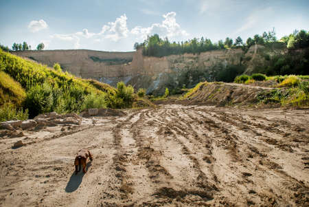Dog on a road to the clay quarry