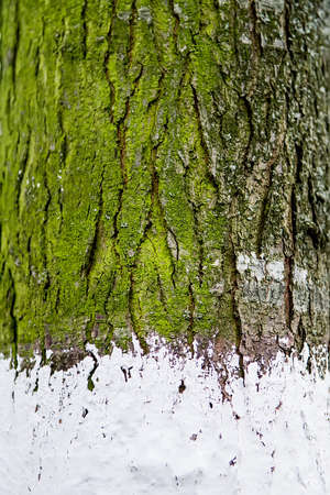 The bark has lichen growing on it providing a green highlight. Selective focus