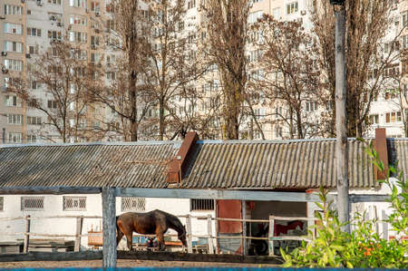 Horse at the fence and the stables in the back