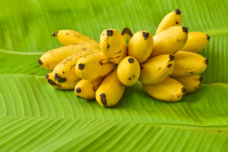 Yellow lady finger bananas put on green banana leaf, kluay-khai, Musaceae, Pisang Mas