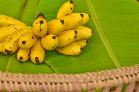 Yellow lady finger bananas put on green banana leaf, kluay-khai, Musaceae, Pisang Mas