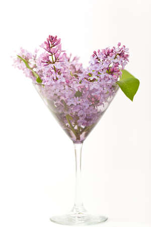 martini glass: Purple Lilac in a Martini glass Stock Photo
