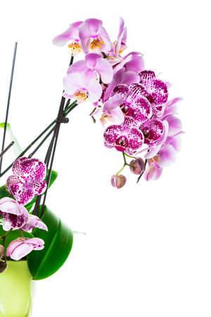 Orchid Flowers Isolated on White Background with Copy Space. Selective focus. Stock Photo - 132112660