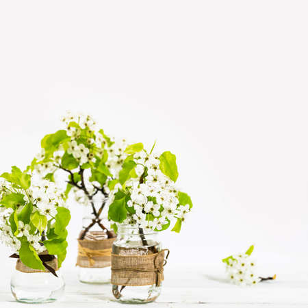 Beautiful Spring Apple Blossoms on white background. Spring Design Concept with copy space. Selective focus.