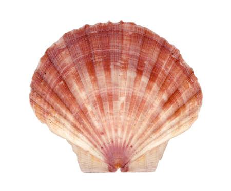 Isolated shell photo