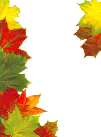 pumpkin border: Red autumn leaves isolated on white