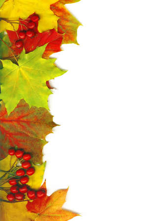 Framework from autumn multi-coloured maple leaves photo