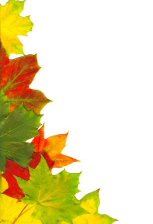 Red autumn leaves isolated on white photo