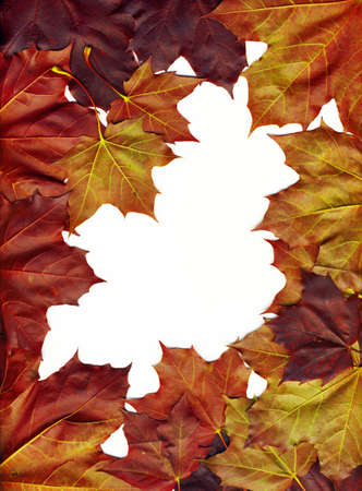 A frame made of beautiful bright leaves photo