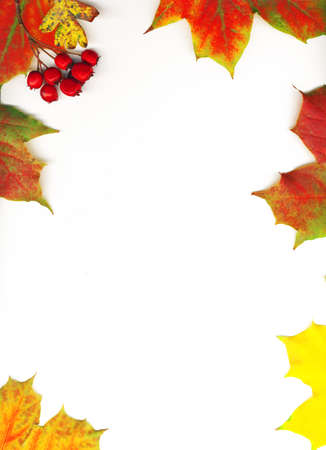 Autumn maple leaf frame background photo