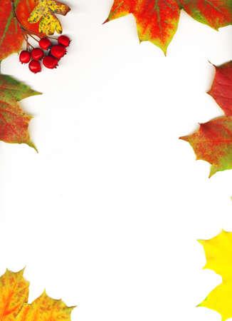 Autumn maple leaf frame background photo
