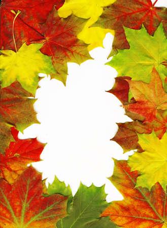 Autumn maple leaf frame background. photo