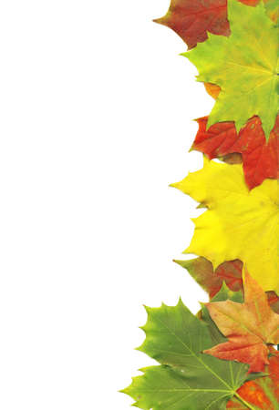 Maple leaves border over white background photo