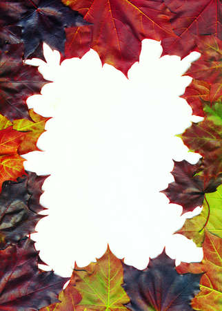 Fall leaves on white background, fall border photo