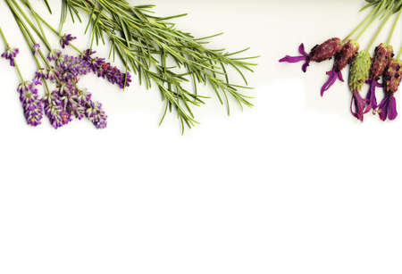 healing herbs (lavander and rosemary) on a white background isolated photo