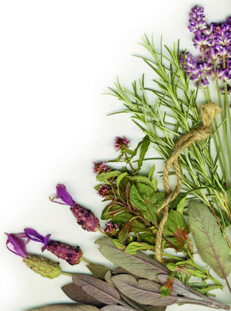 Background made from healing herbs photo