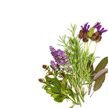 thyme: Achtergrond gemaakt van geneeskrachtige kruiden Stockfoto
