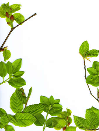 Spring leaves border over white background photo
