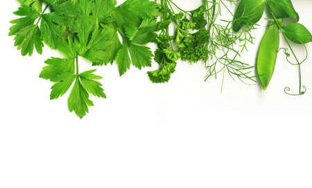Border of fresh herbs, including dill, peas, basil, thyme, sage, parsley and oregano. photo