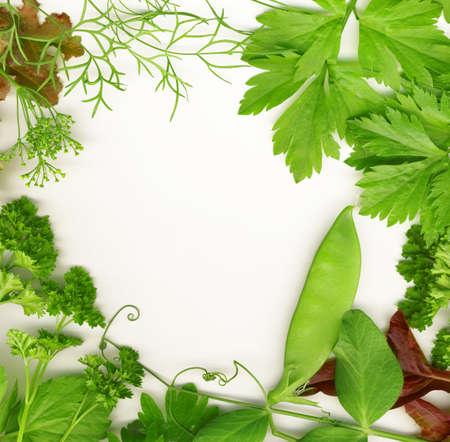 Grens van verse kruiden, zoals dille, erwten, basilicum, tijm, salie, peterselie en oregano. Stockfoto
