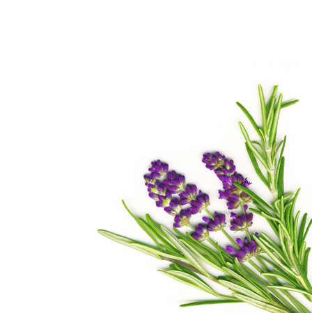 medicinal plants: La lavanda y el romero aislados en blanco