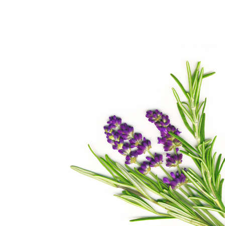 medicinal: Lavender and Rosemary isolated on white Stock Photo