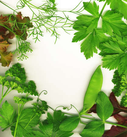 green peas: Border of fresh herbs, including dill, peas, basil, thyme, sage, parsley and oregano.