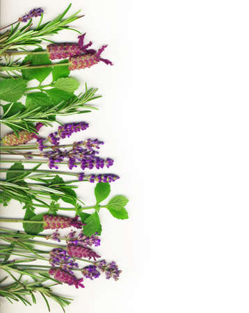 rosemary flower:  Herb border on white, including rosemary,  mint and lavender. Stock Photo