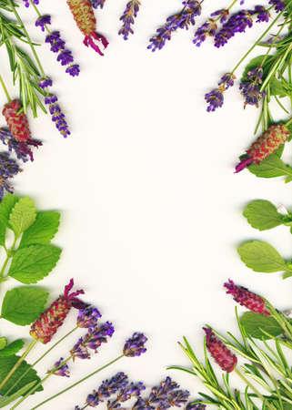 Een frame gemaakt van geneeskrachtige kruiden (lavendel en rozemarijn) op een witte achtergrond wordt geïsoleerd Stockfoto