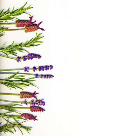 Eine Grenze von Heilkräutern hergestellt (Lavendel und Rosmarin) auf einem weißen Hintergrund