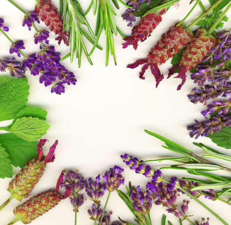 Herb frame on white, including rosemary,  mint and lavender. photo