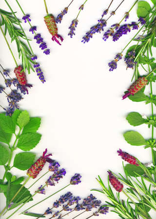 A frame made of healing herbs (lavender and rosemary) on a white background isolated photo