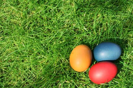 are hidden: Easter eggs hidden in the grass